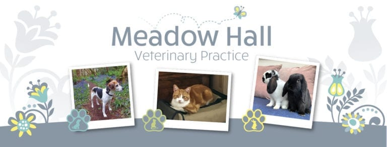 Pets at Meadow Hall Vets