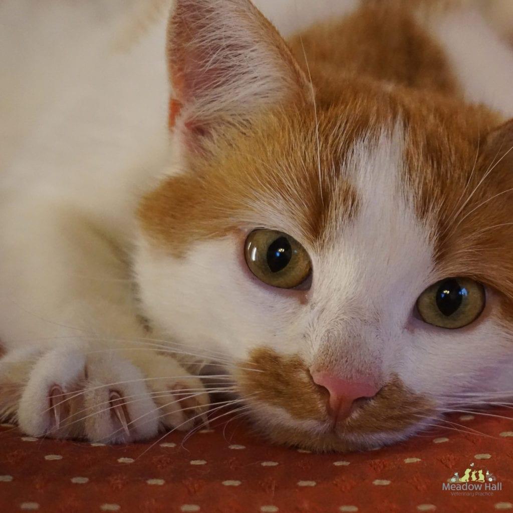 Trim senior cats claws